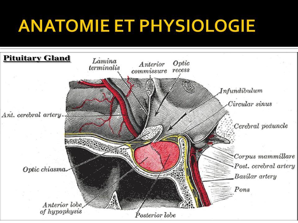 Ungewöhnlich Schlucken Anatomie Und Physiologie Zeitgenössisch ...