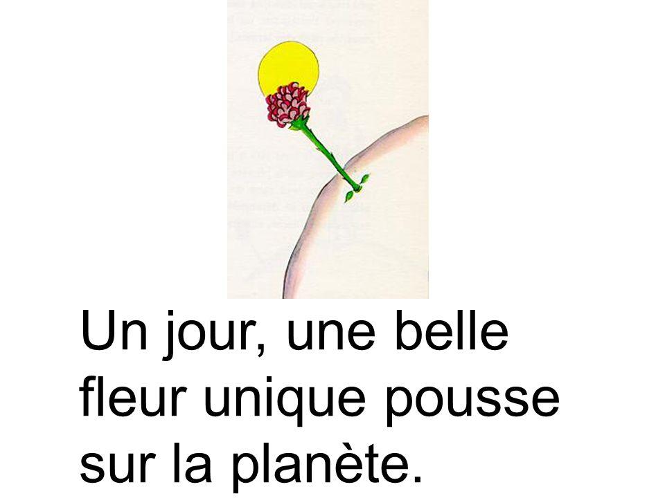 Un jour, une belle fleur unique pousse sur la planète.