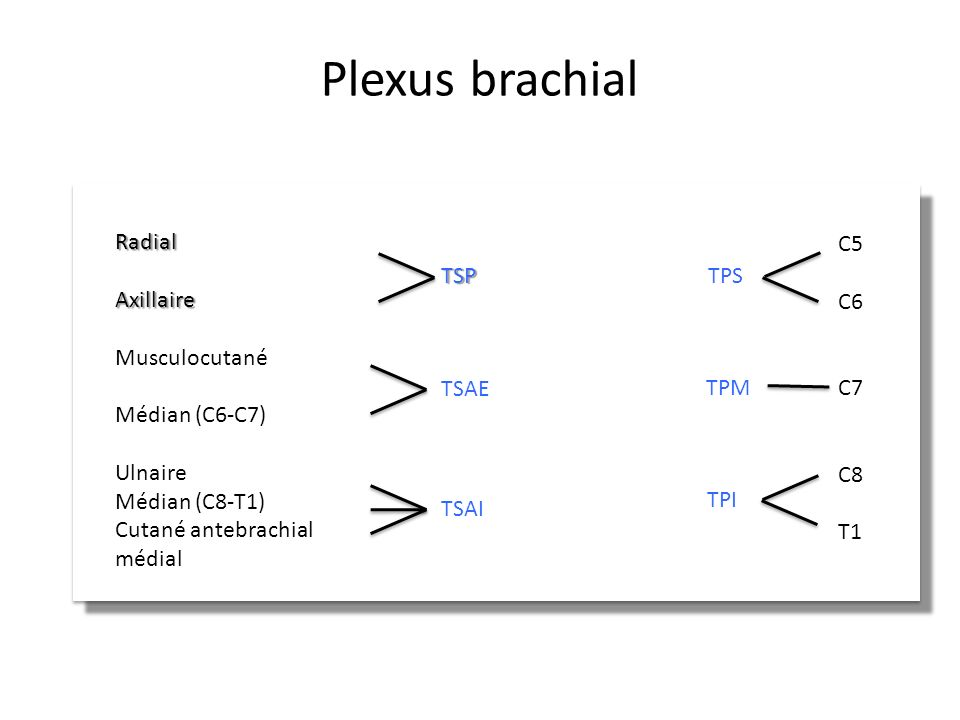 Plexus brachial TPS TPI TPM TSP TSAE TSAI C5 C6 C7 C8 T1 Radial