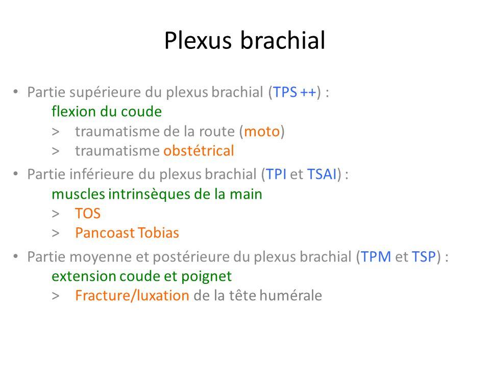Plexus brachial Partie supérieure du plexus brachial (TPS ++) : flexion du coude > traumatisme de la route (moto) > traumatisme obstétrical.