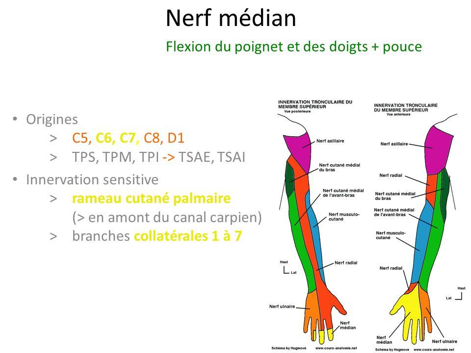 Nerf médian Flexion du poignet et des doigts + pouce