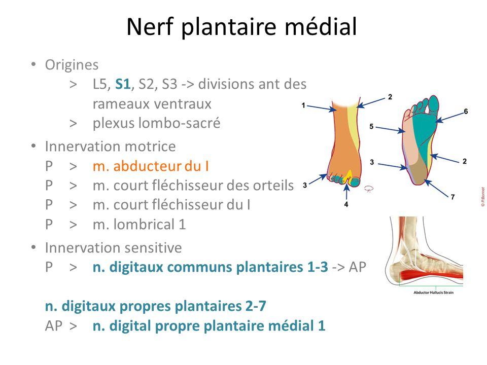 Nerf plantaire médial Origines > L5, S1, S2, S3 -> divisions ant des rameaux ventraux > plexus lombo-sacré.
