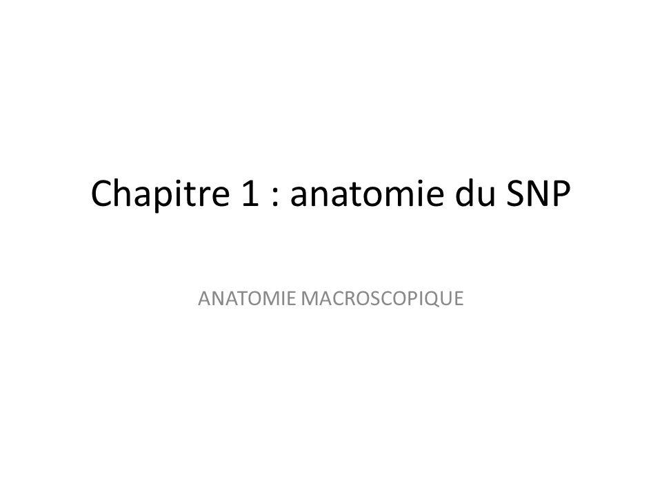 Chapitre 1 : anatomie du SNP