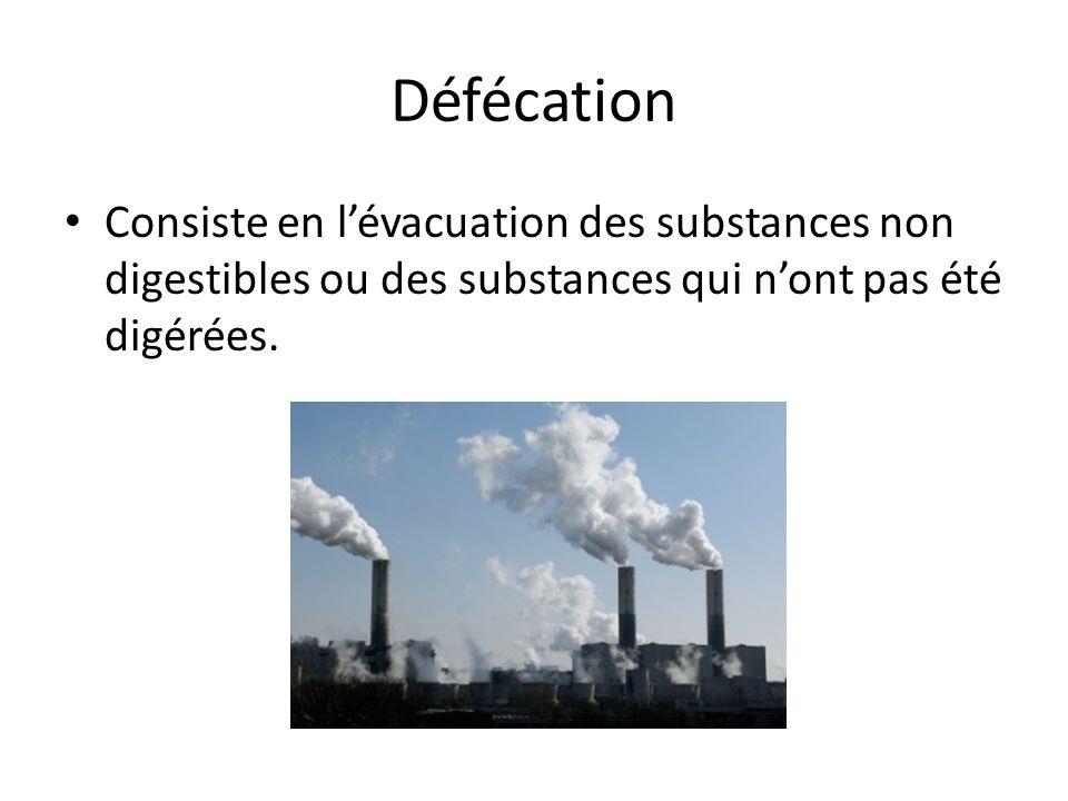 Défécation Consiste en l'évacuation des substances non digestibles ou des substances qui n'ont pas été digérées.