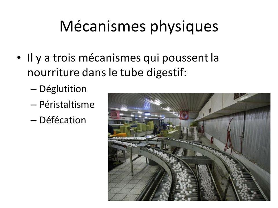 Mécanismes physiques Il y a trois mécanismes qui poussent la nourriture dans le tube digestif: Déglutition.