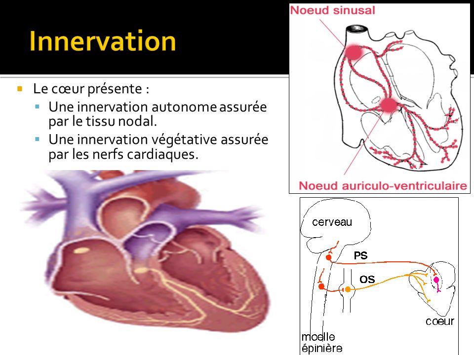 Innervation Le cœur présente :