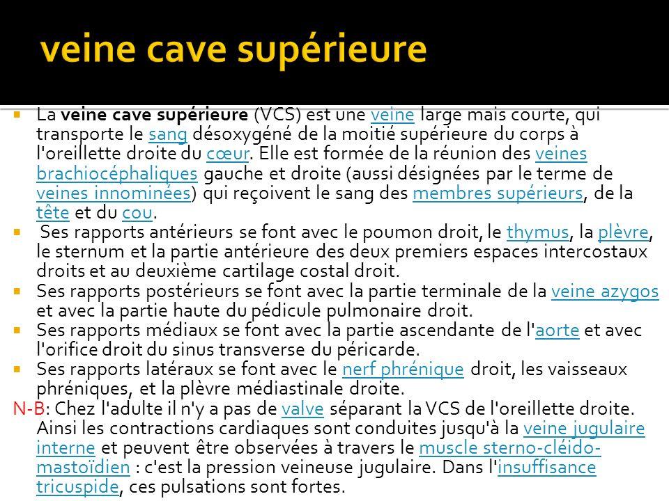 veine cave supérieure