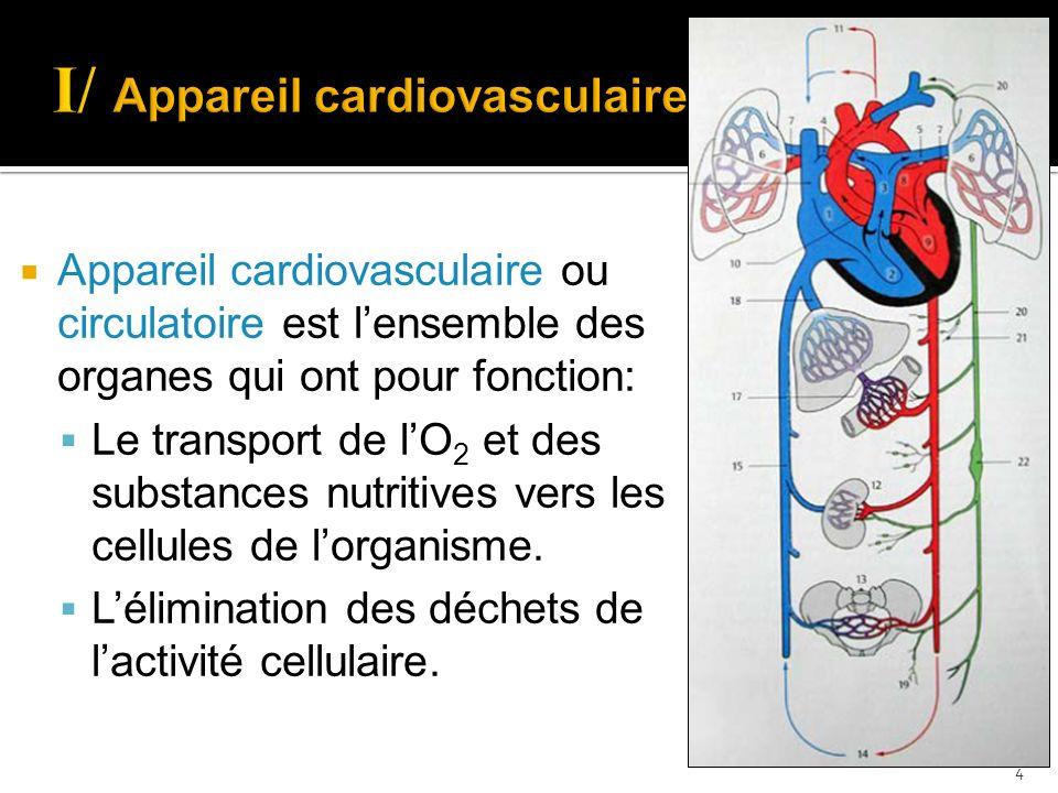 I/ Appareil cardiovasculaire