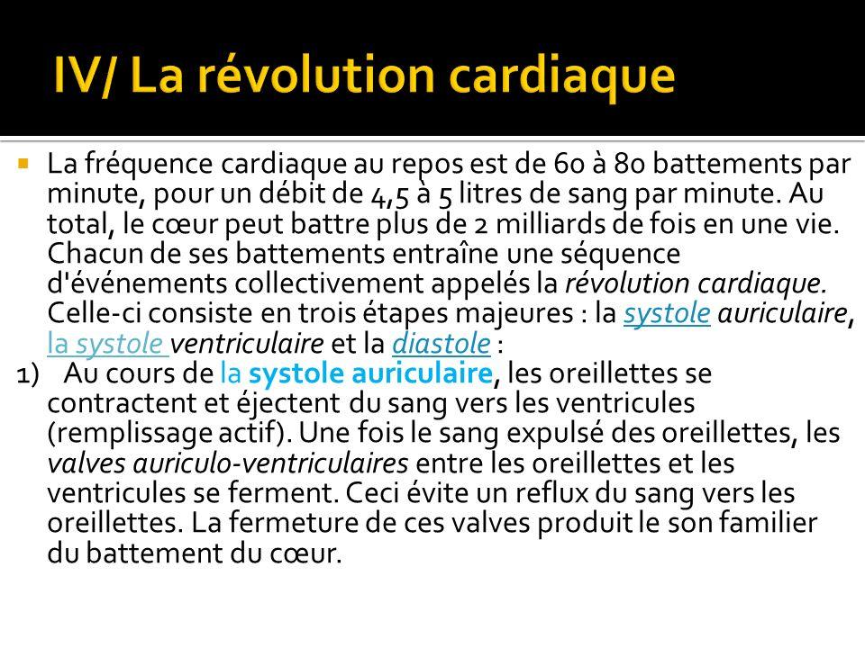 IV/ La révolution cardiaque