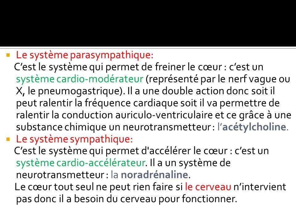Le système parasympathique: