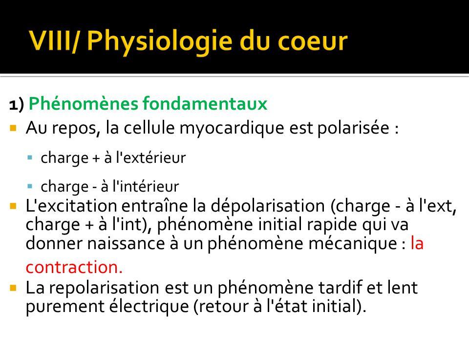 VIII/ Physiologie du coeur