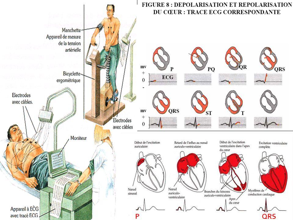 08/01/2008 Dr. ABDALLAH - Appareil circulatoire P QRS