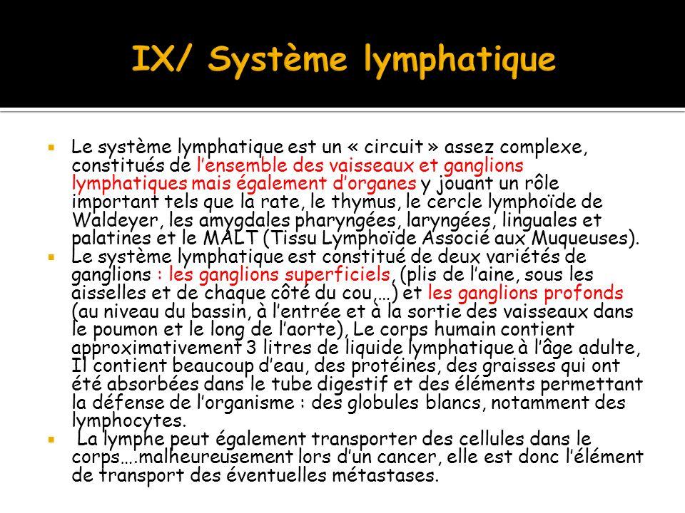 IX/ Système lymphatique