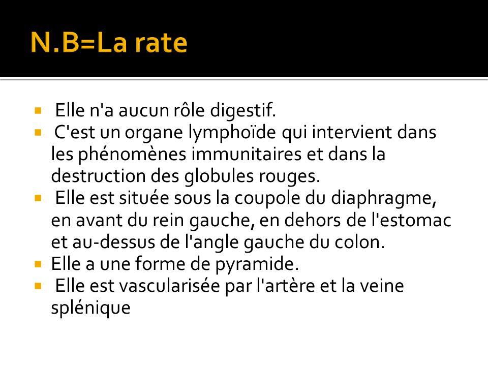 N.B=La rate Elle n a aucun rôle digestif.