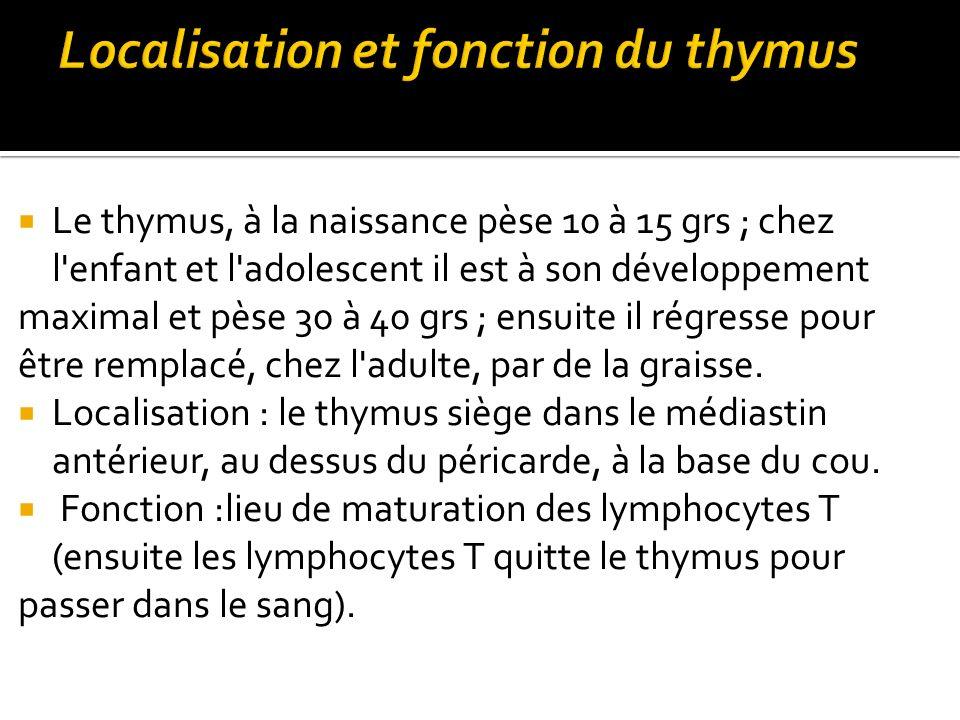 Localisation et fonction du thymus