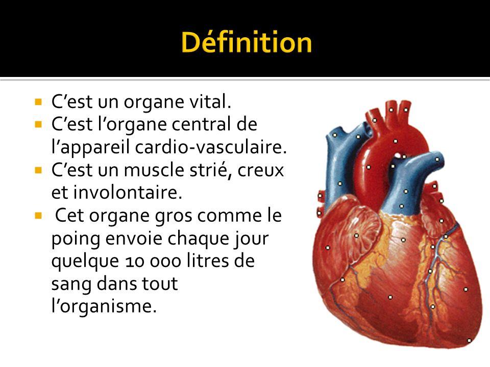 Définition C'est un organe vital.
