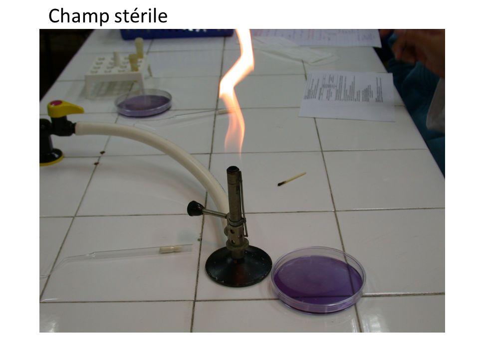 Champ stérile