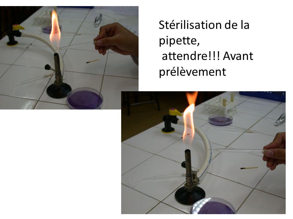 Stérilisation de la pipette,