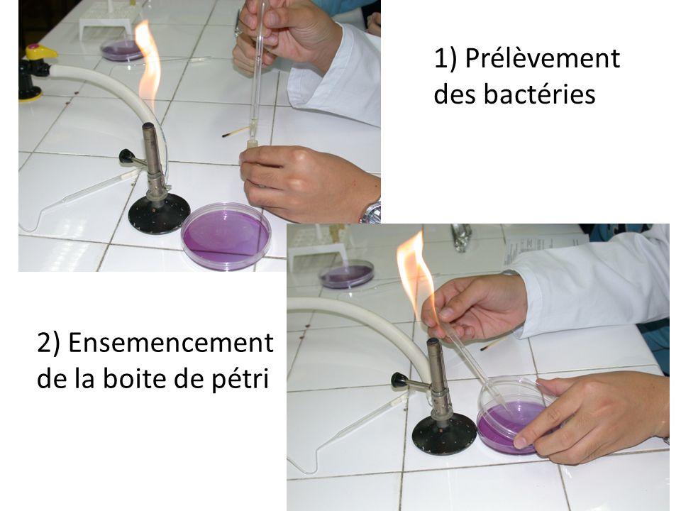 1) Prélèvement des bactéries