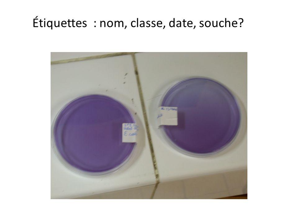 Étiquettes : nom, classe, date, souche