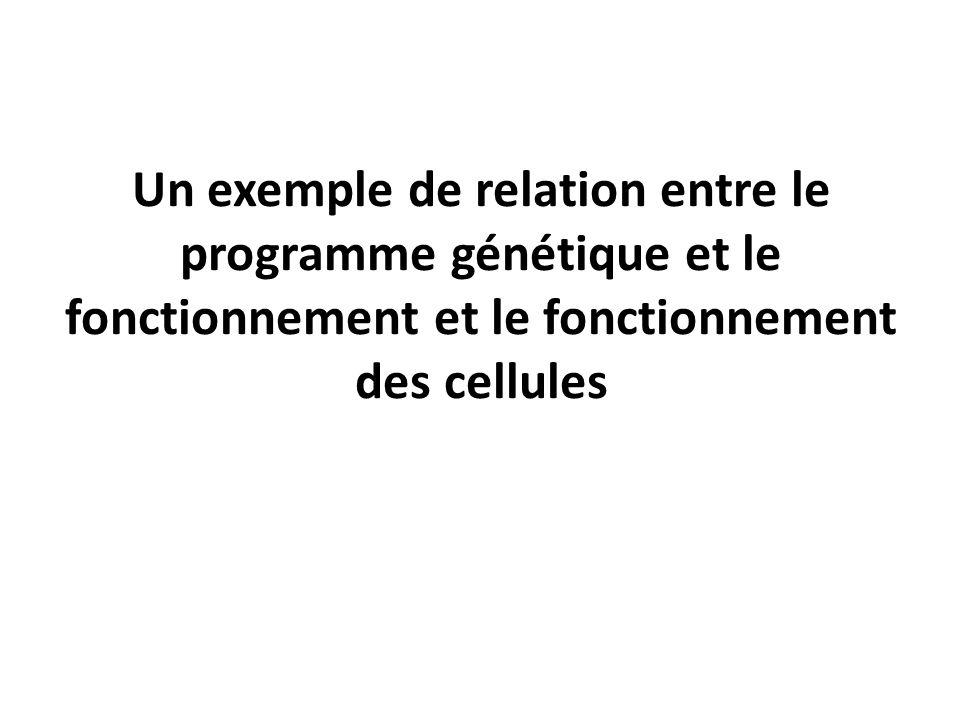 Un exemple de relation entre le programme génétique et le fonctionnement et le fonctionnement des cellules