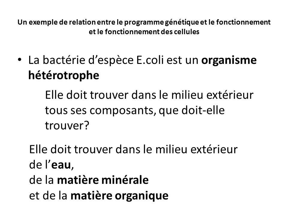 La bactérie d'espèce E.coli est un organisme hétérotrophe