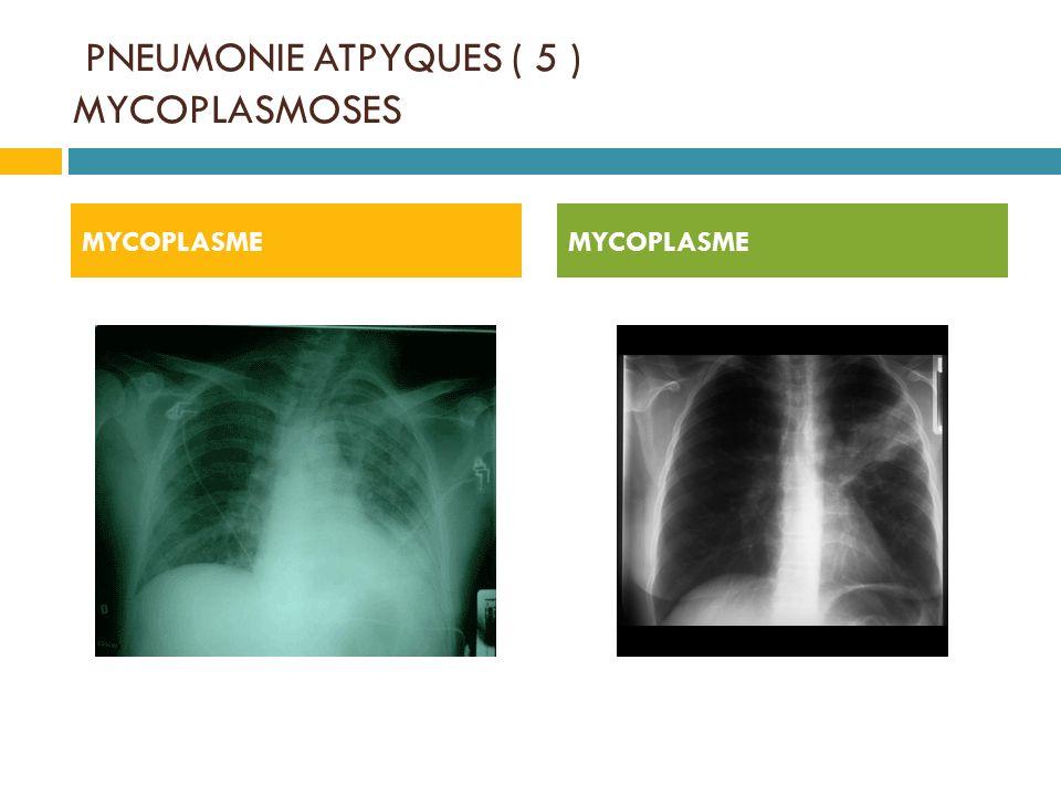 PNEUMONIE ATPYQUES ( 5 ) MYCOPLASMOSES