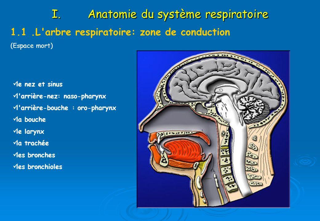 Niedlich Anatomie Und Physiologie Des Larynx Bilder - Menschliche ...