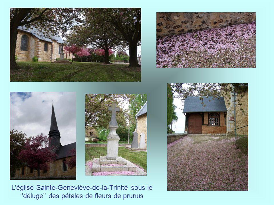 L'église Sainte-Geneviève-de-la-Trinité sous le ''déluge'' des pétales de fleurs de prunus