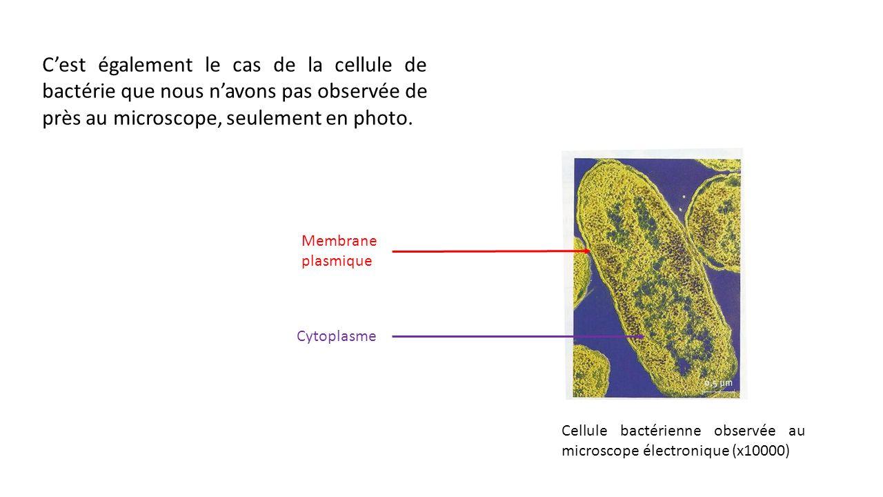C'est également le cas de la cellule de bactérie que nous n'avons pas observée de près au microscope, seulement en photo.