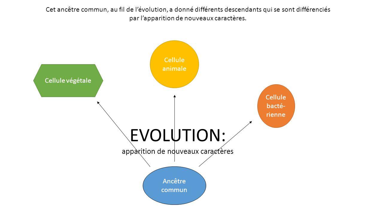 EVOLUTION: apparition de nouveaux caractères