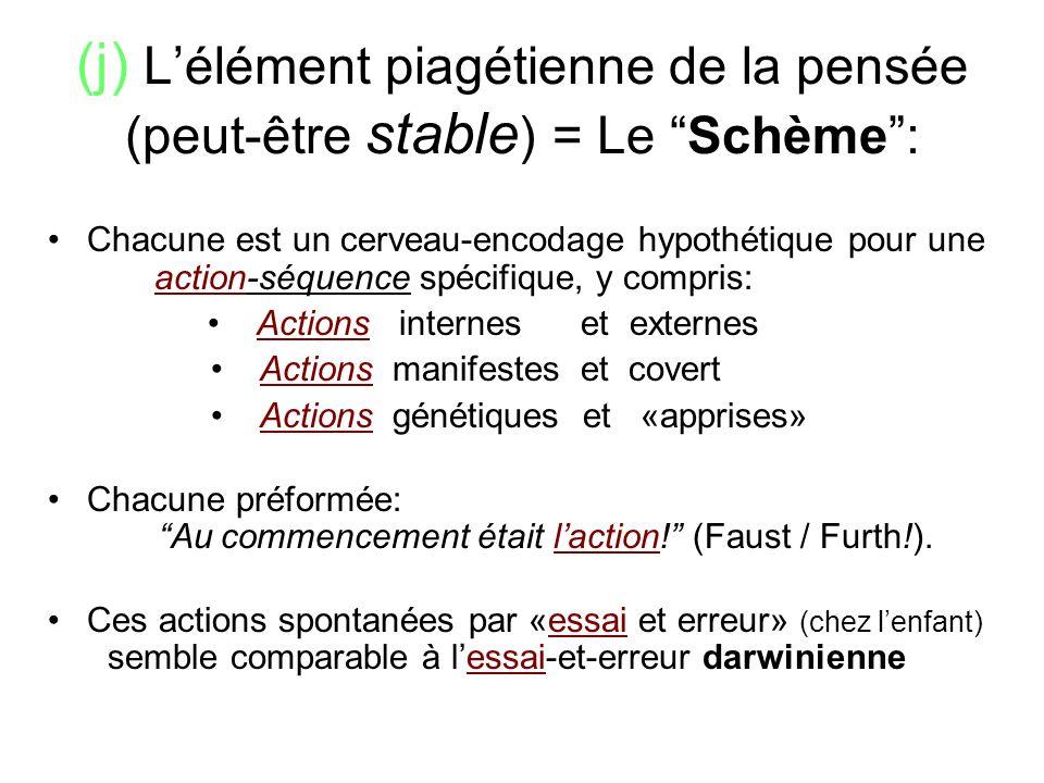 (j) L'élément piagétienne de la pensée (peut-être stable) = Le Schème :