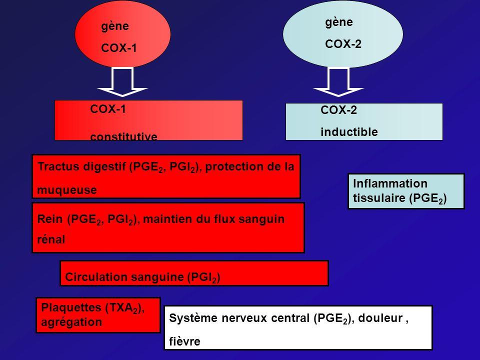 gène COX-2. gène. COX-1. COX-1. constitutive. COX-2. inductible. Tractus digestif (PGE2, PGI2), protection de la muqueuse.