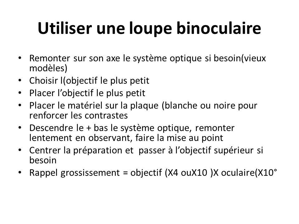 Utiliser une loupe binoculaire