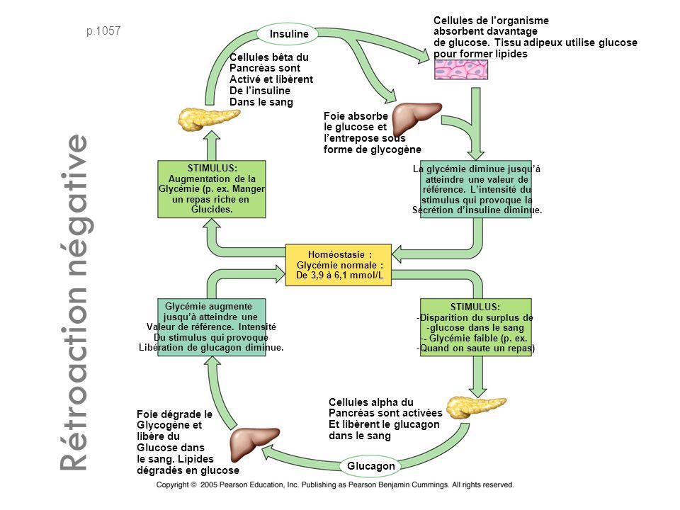 Rétroaction négative p.1057 Cellules de l'organisme