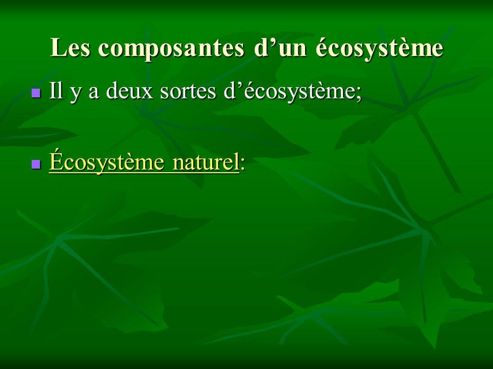 Les composantes d'un écosystème