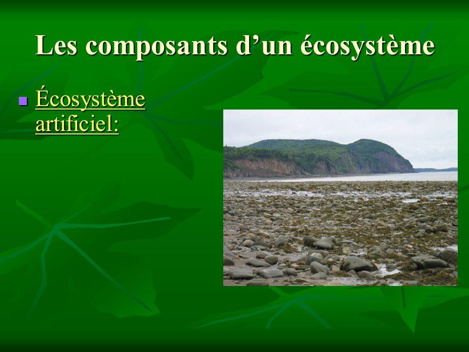 Les composants d'un écosystème