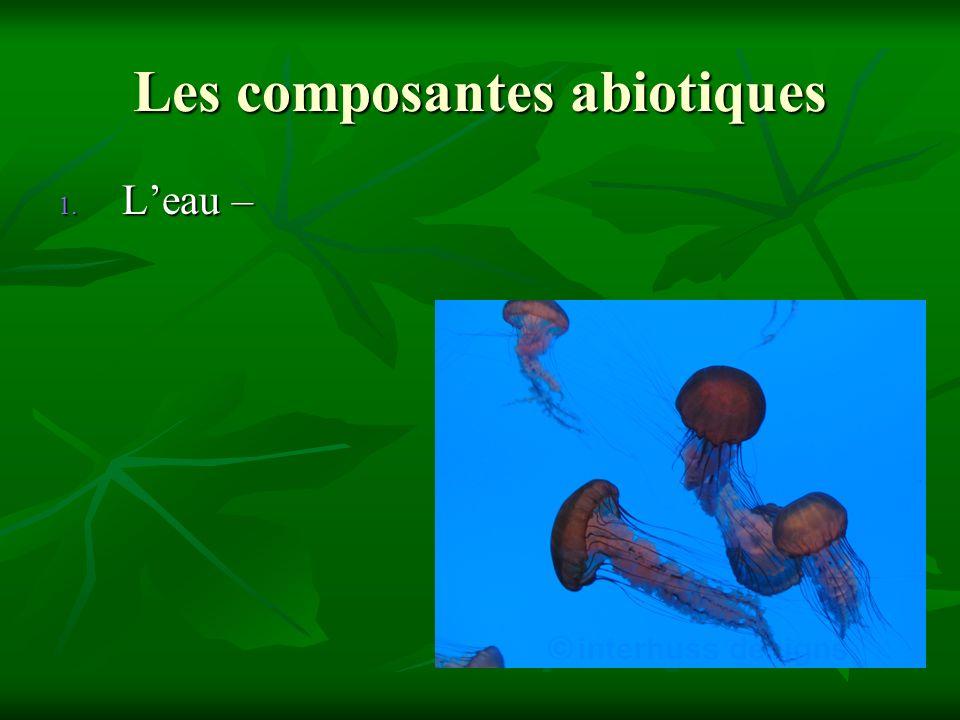 Les composantes abiotiques