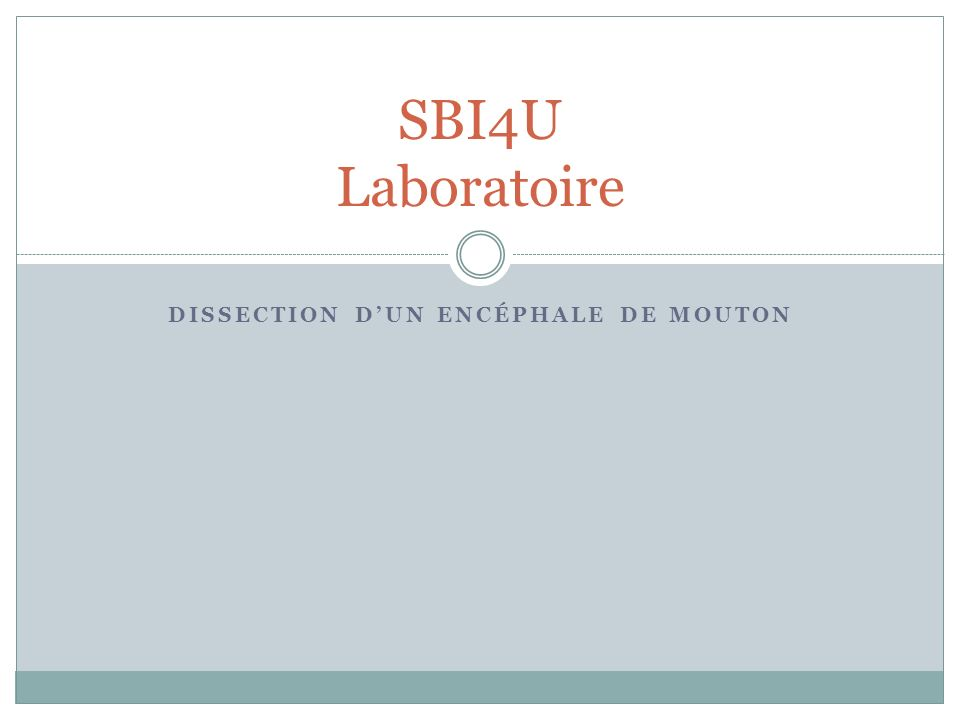 Dissection d'un encéphale de mouton