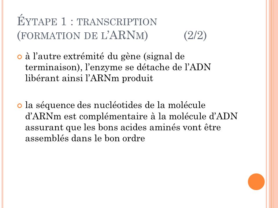Éytape 1 : transcription (formation de l'ARNm) (2/2)