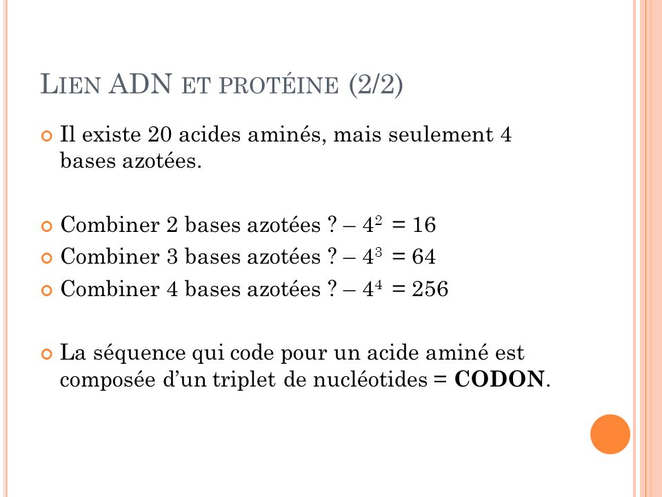 Lien ADN et protéine (2/2)