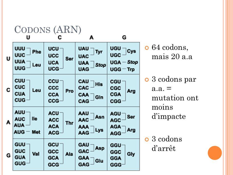 Codons (ARN) 64 codons, mais 20 a.a
