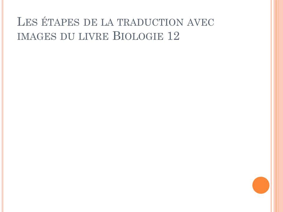 Les étapes de la traduction avec images du livre Biologie 12