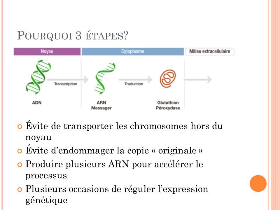 Pourquoi 3 étapes Évite de transporter les chromosomes hors du noyau