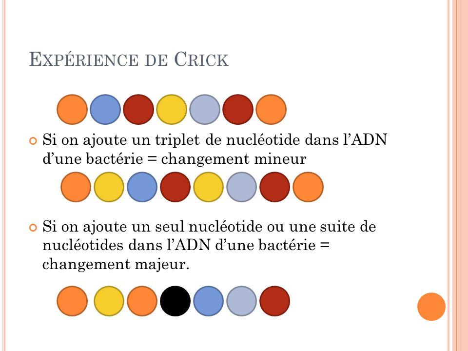 Expérience de Crick Si on ajoute un triplet de nucléotide dans l'ADN d'une bactérie = changement mineur.