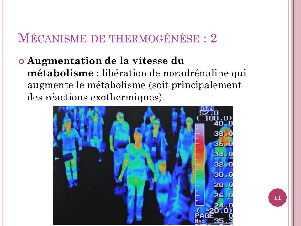 Mécanisme de thermogénèse : 2