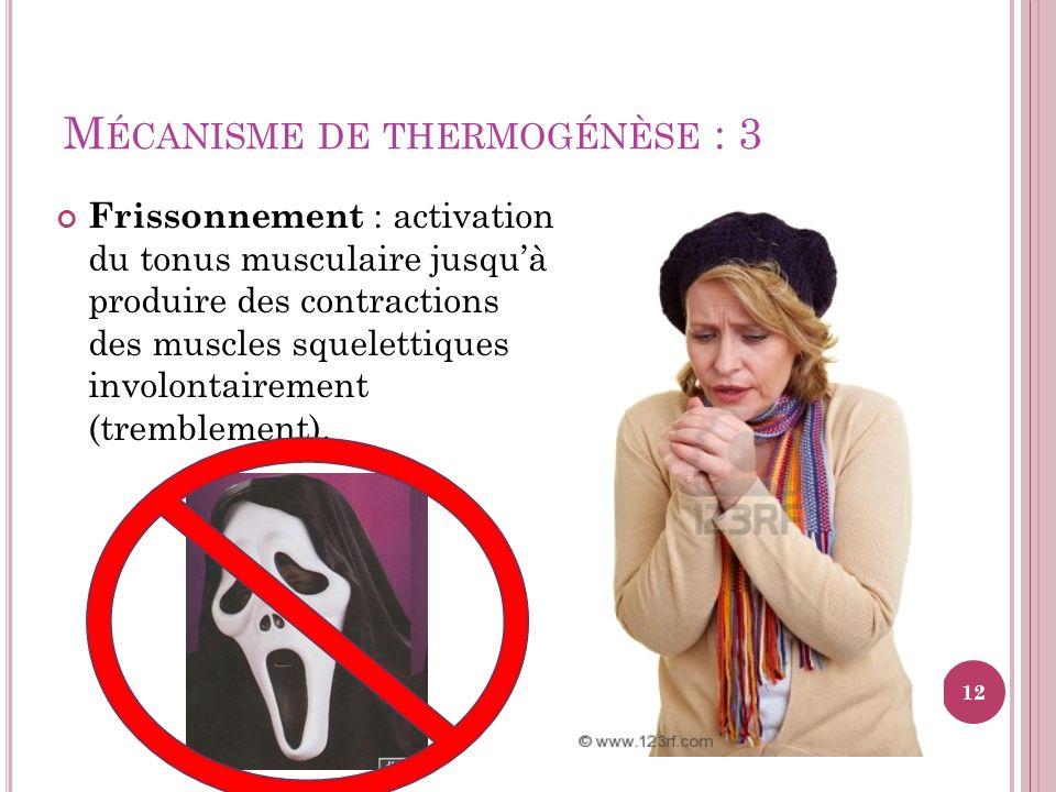 Mécanisme de thermogénèse : 3