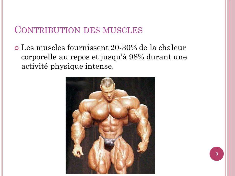 Contribution des muscles