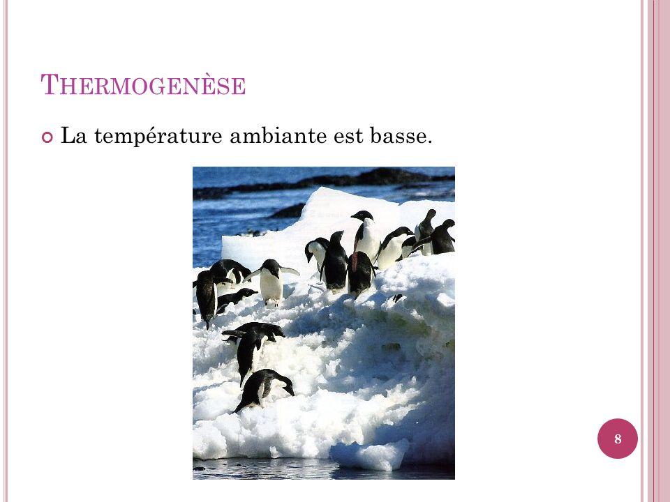 Thermogenèse La température ambiante est basse.