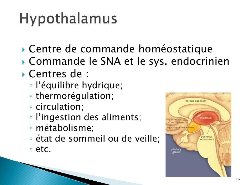 Hypothalamus Centre de commande homéostatique